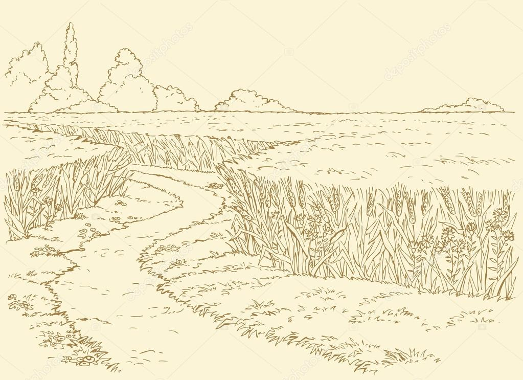 Vector summer landscape. Path through fields of wheat