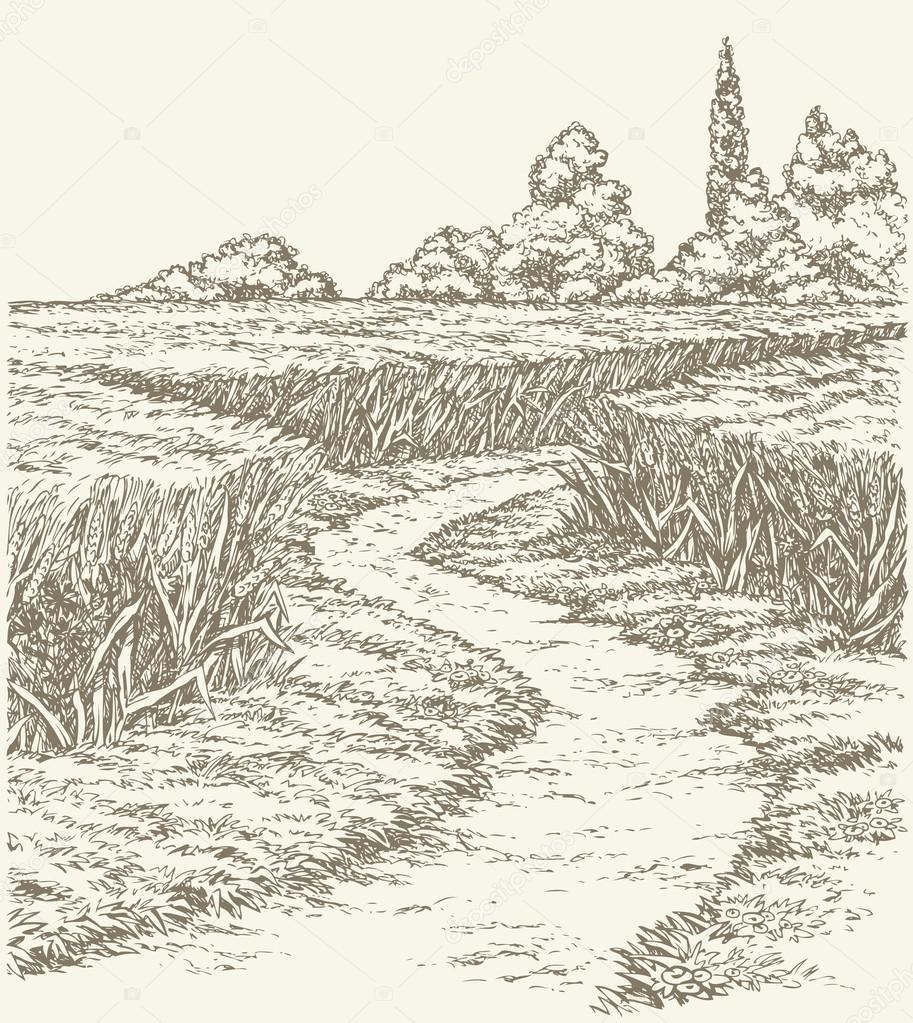 Vector summer landscape. Dirt path through fields of wheat