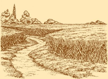 Vector summer landscape. Dirt path through fields of wheat