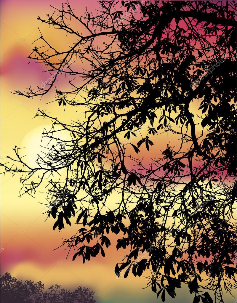 Autumn chestnut branches against evening sky