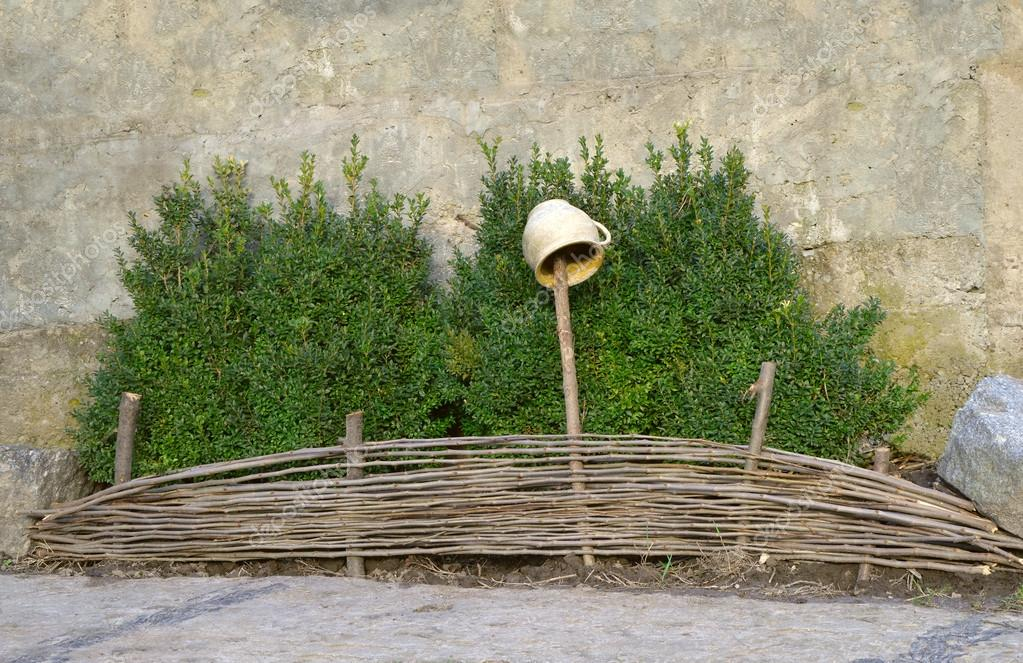 Boxwood shrubs for wicker fence with pot