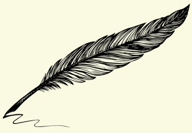 Vector freehand drawing of dark bird feather