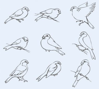 Vector outline image. Set of tits and bullfinches