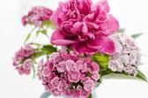 fiore di peonia isolato.