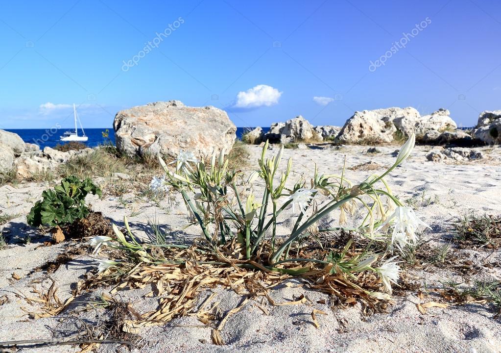 Flowers growing on a beach. Selective focus — Stock Photo © Ferumov ...