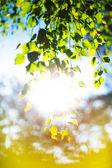 Fotografie slunce svítilo lesních stromů