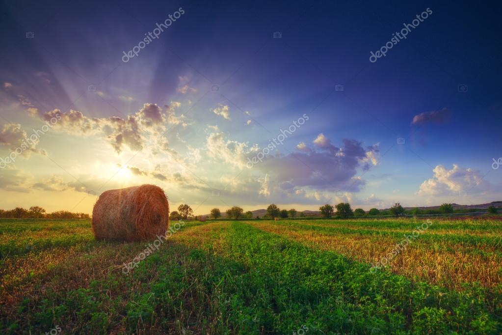 Sunset field, tree and hay bale made by HDR