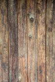 texture legno albero