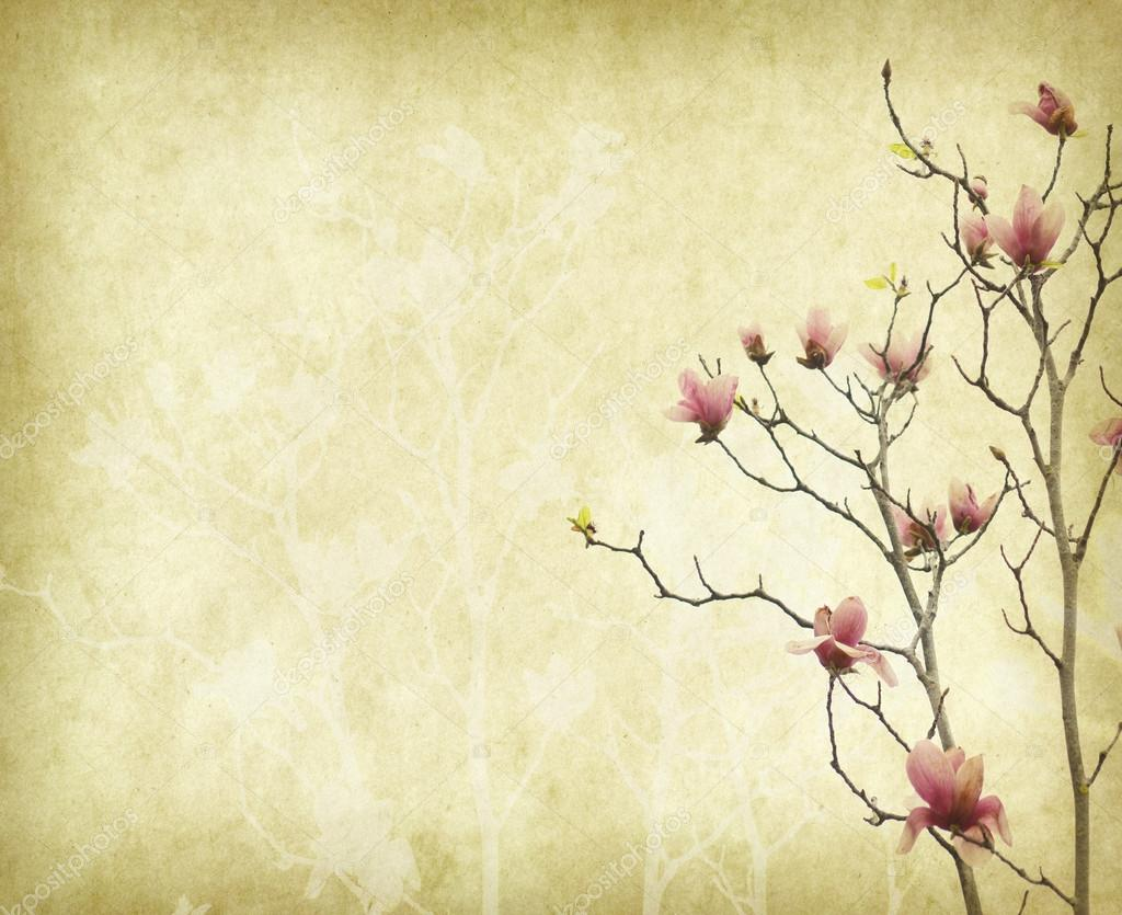 Magnolia Flower With Old Antique Vintage Paper Background Stock