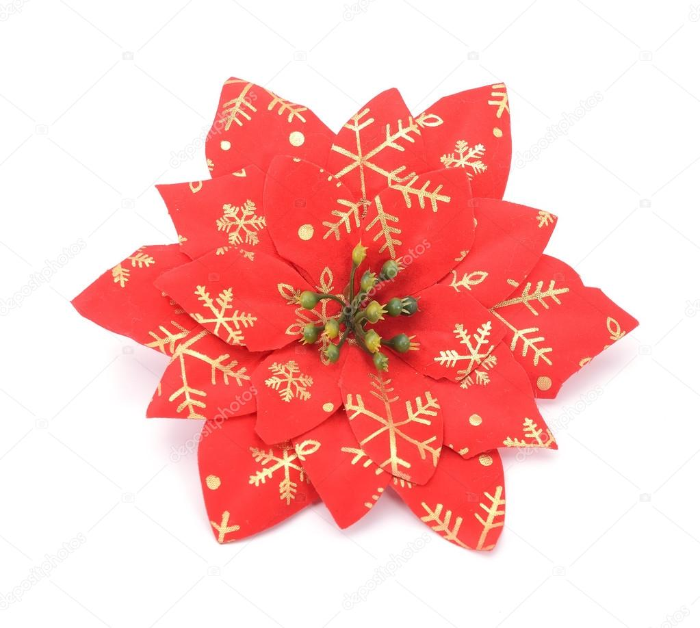 Christmas Flower Poinsettia Stock Photo Firefox 34581039