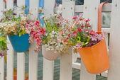 Fotografie hängende Blumentöpfe mit Zaun