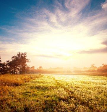 Meadow on sunrise