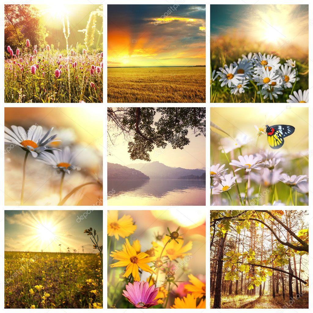 Flower spring background stock vector