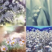 Photo Flowers collage