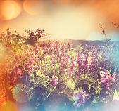 Fotografie Summer meadow