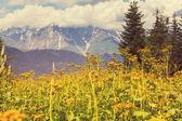 Fotografie Caucasus mountains