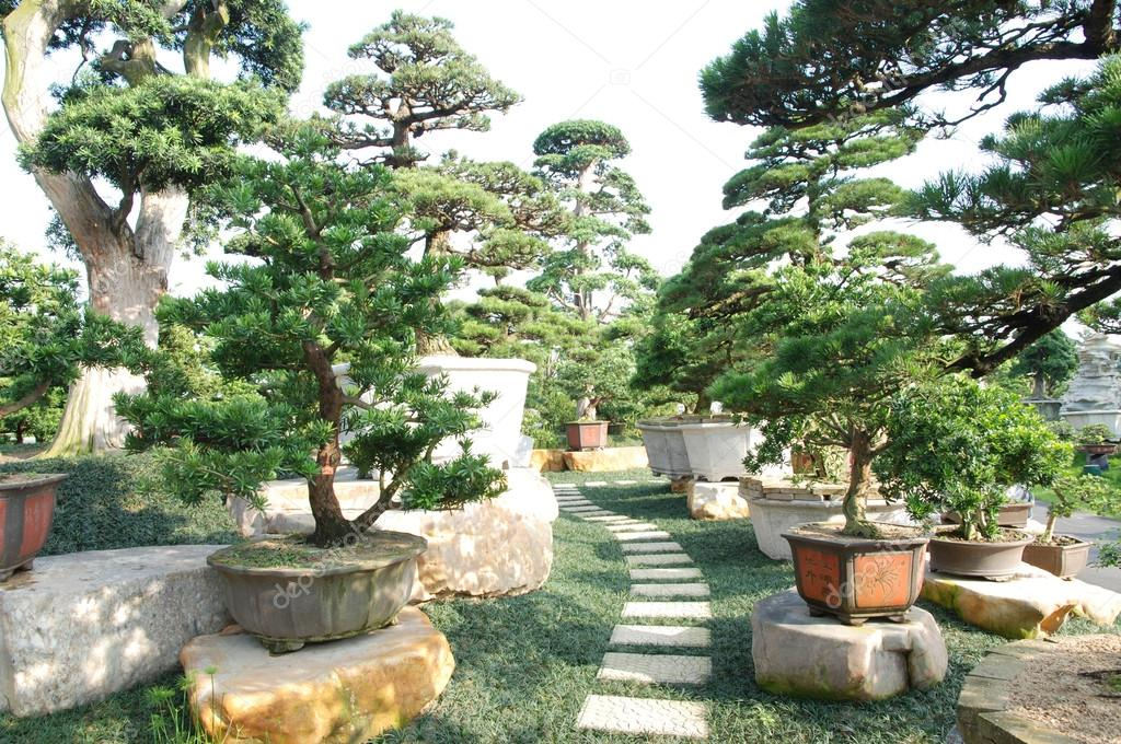 Bilder Schöne Gärten schöne gärten bonsai stockfoto donkeyru 28256841