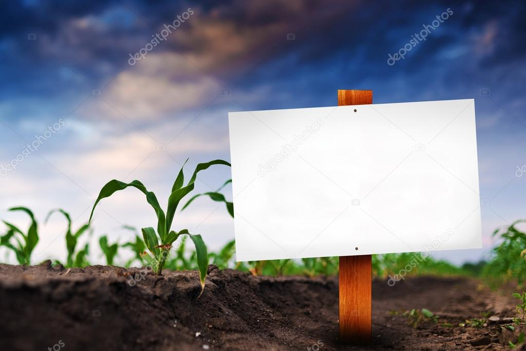 Blank sign in corn agricultural field