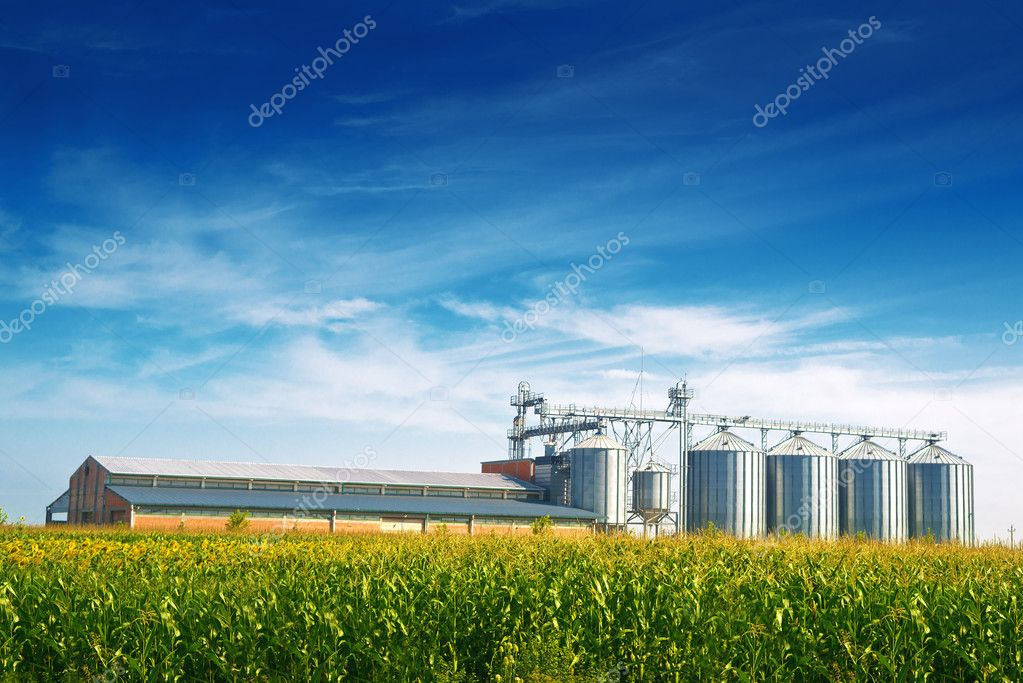 Grain Silos in Corn Field