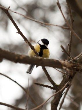 Tit perched on a stick