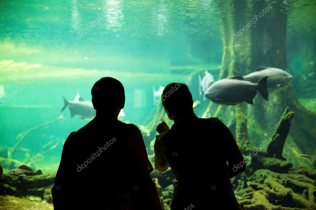 Couple at the oceanarium