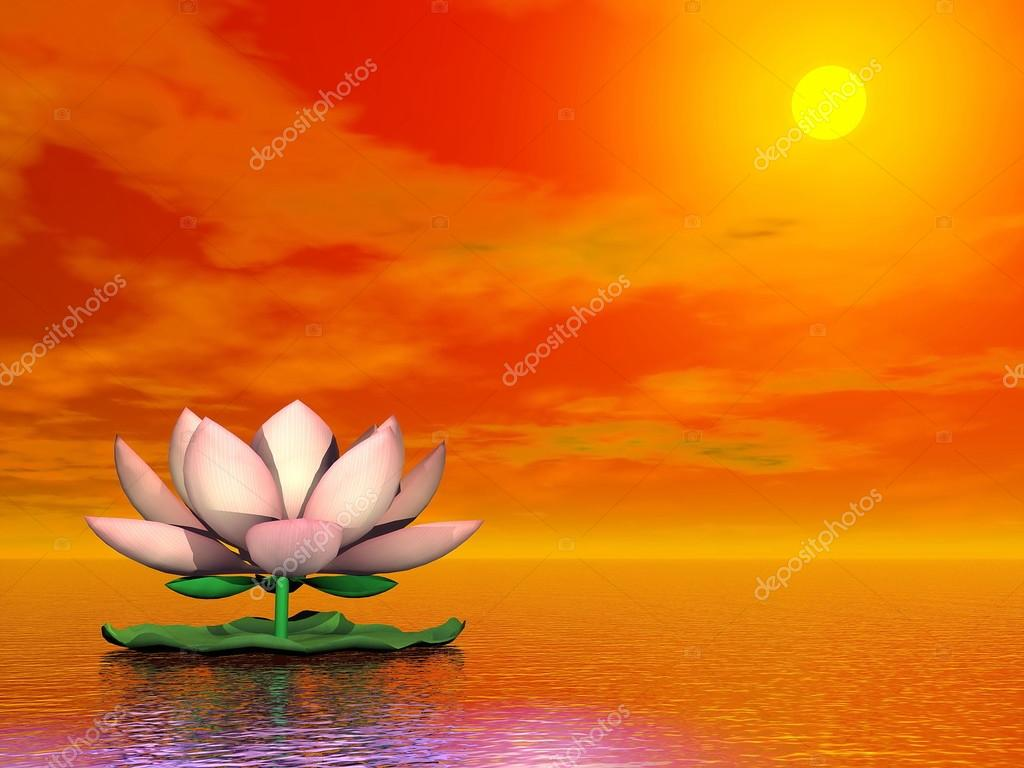 Lotus flower by sunset 3d render stock photo elenarts 25406947 beautiful pink lotus flower on the water by red sunset photo by elenarts izmirmasajfo Images