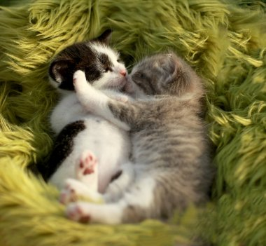 Cuddling Kittens Outdoors in Natural Light