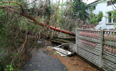 Damaged fallen tree on a rural road