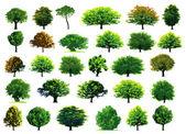 kolekce zelené stromy