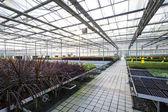 skleníku