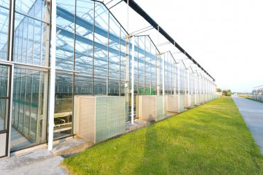 background of a commercial greenhouse