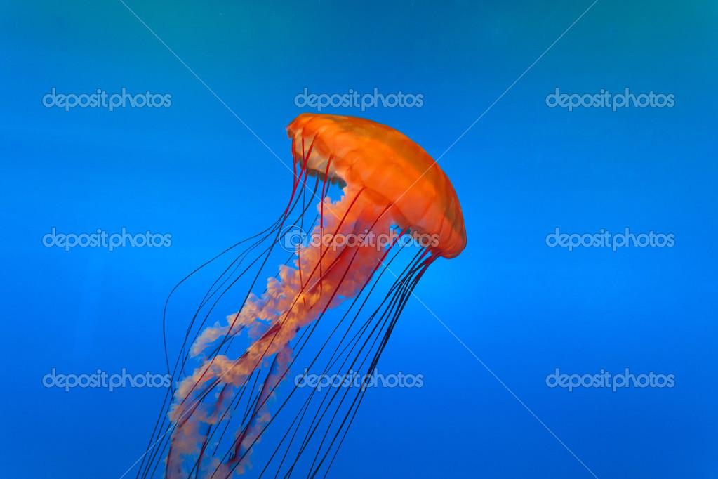 Imagen De Medusa: Foto De Stock © Zhudifeng