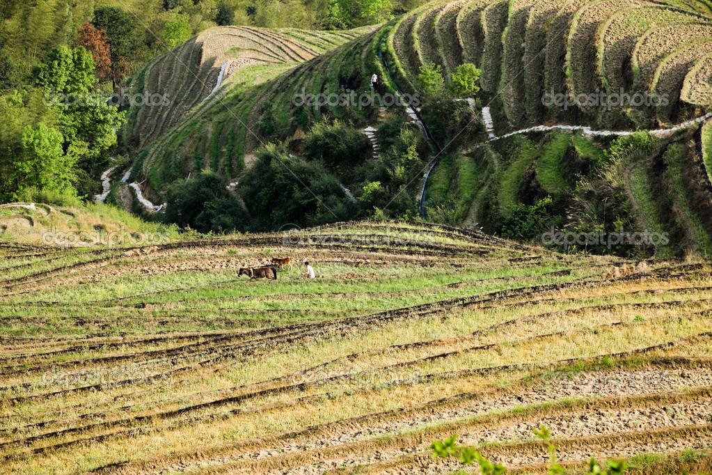 coltivazione a terrazza — Foto Stock © chungking #12763111