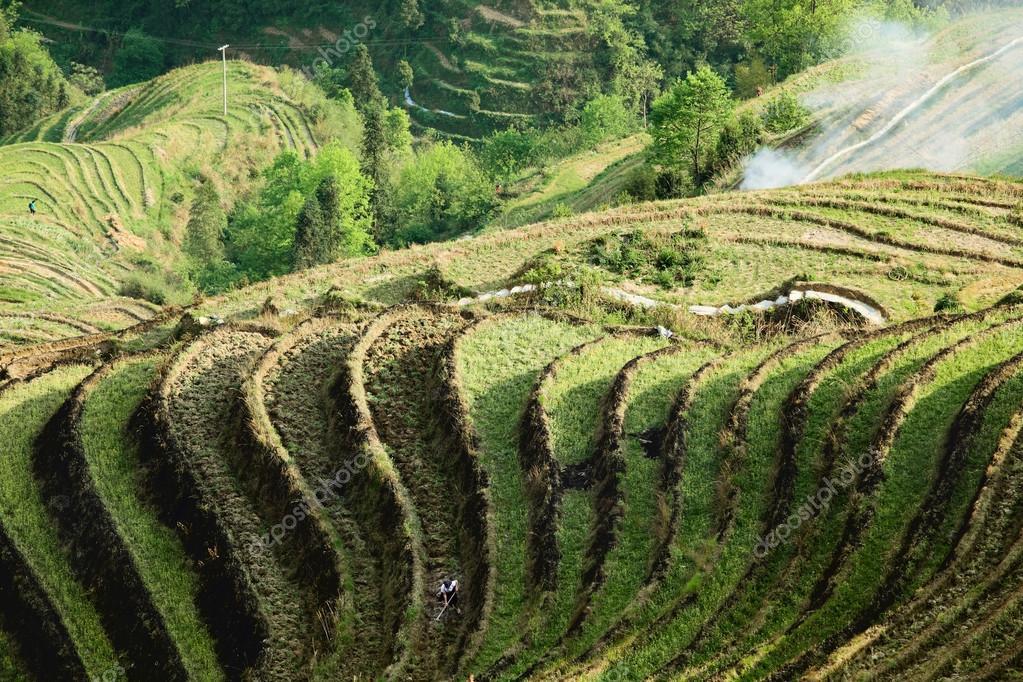 Cultivo De Terraza Foto De Stock Chungking 12763141