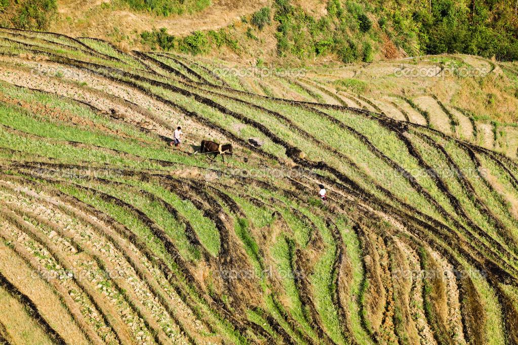 Cultivos En Terrazas De Cultivo En La Primavera Fotos De
