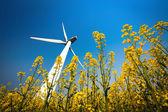 Velké větrné turbíny v řepkovém poli