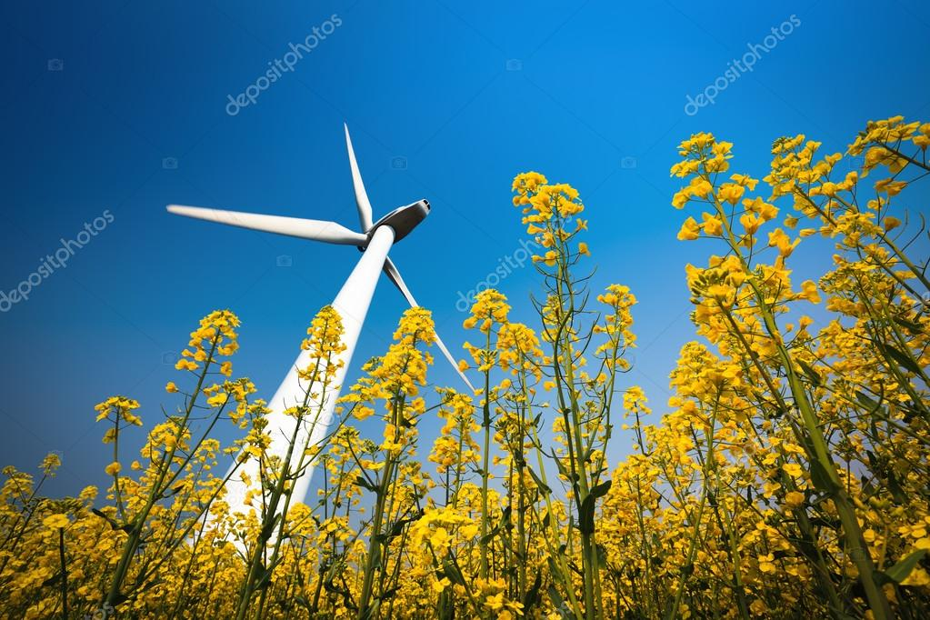 a big wind turbine in rapeseed field