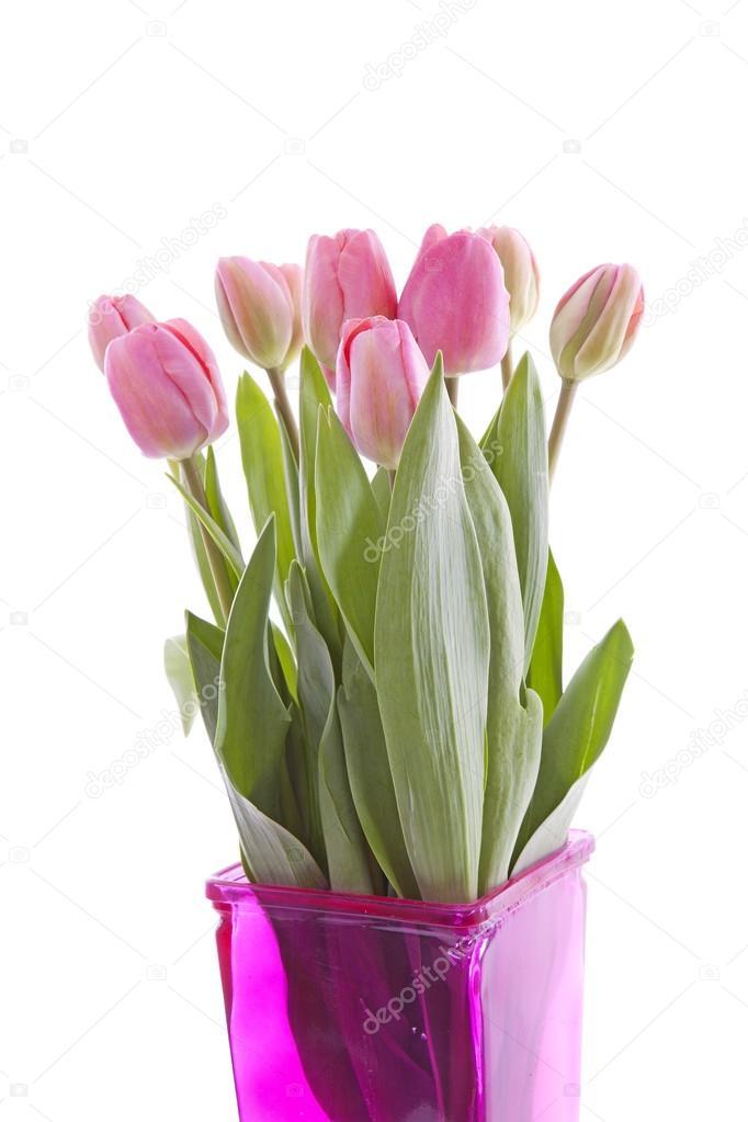 Pink Dutch Tulips In Vase Stock Photo Sannie32 43148653