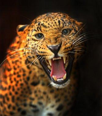Portrait of Leopard stock vector