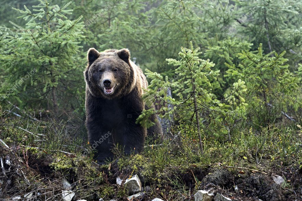 bear #hashtag