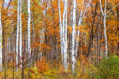 Colours of the autumn forest
