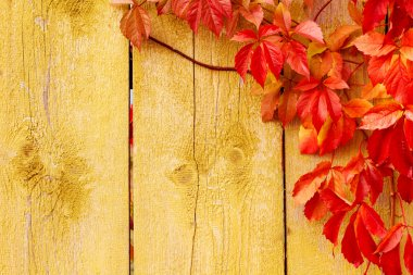 Autumn background,: grape red leaves, wooden texture