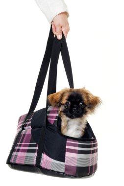 Puppy dog in bag