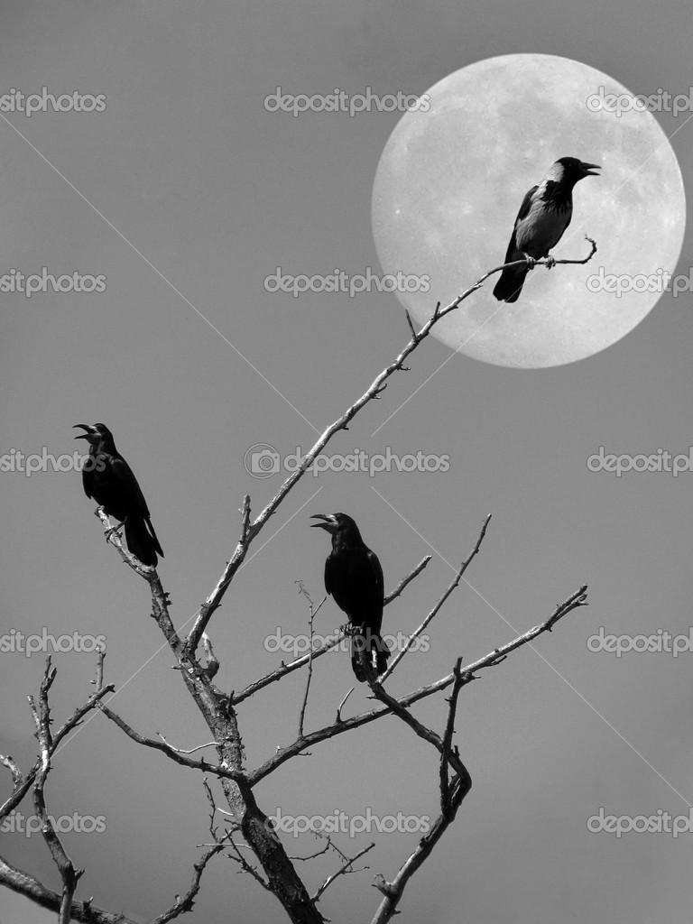 Картинки сухое дерево луна вороны