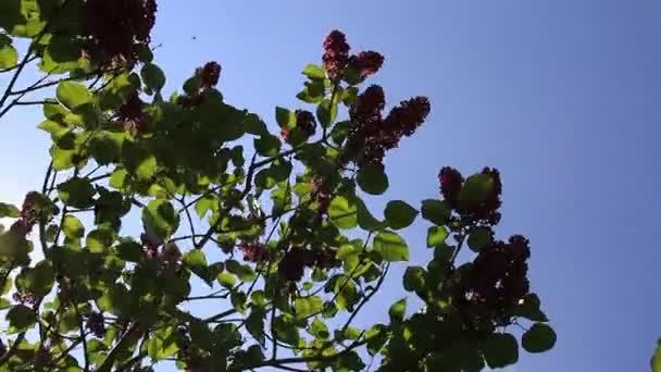 kvetoucí fialové květy