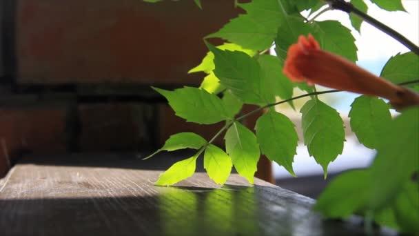 zöld levelek, egy narancs virág