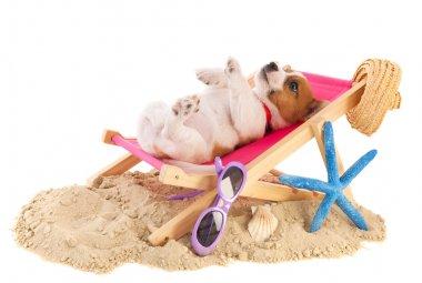 Little cute beach puppy resting in chair stock vector