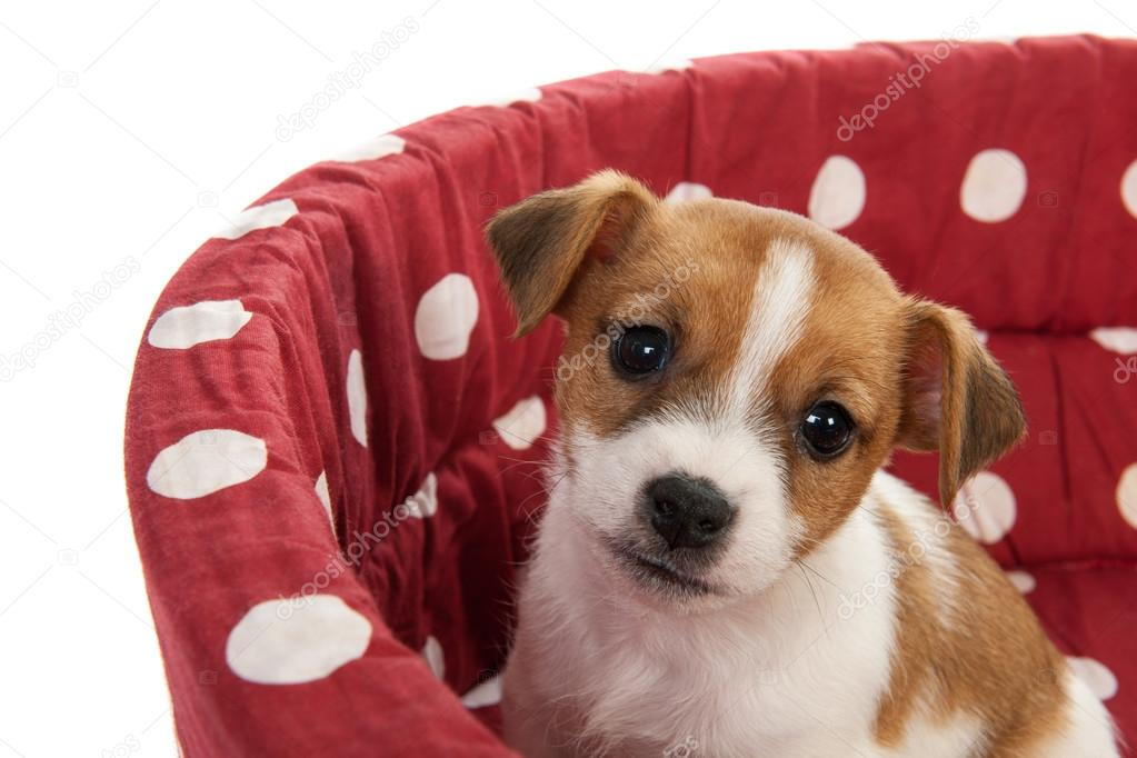 essays on puppie Article shared by essay on dog - man's best friend - the dog is a loving companion to a man he is happy to go everywhere with his master he shows his affection for his master by wagging his tail and licking his hand or face.