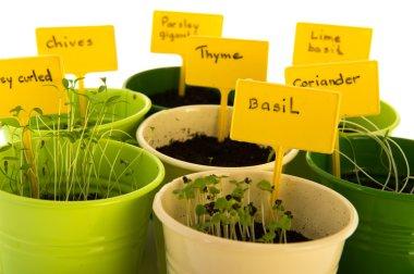 sowed herbs