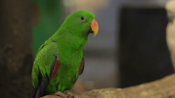 Papoušek pták